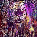 Tiger Predator Fur Beautiful  by PixBreak Art