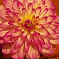 #928 D855 Dahlia Close Up by Robin Lee Mccarthy Photography
