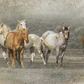A Band Of Horses by Belinda Greb