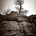 A Barren Perch - Sepia by Christopher Holmes