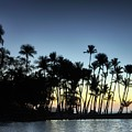 A-bay Aloha by David Bernal