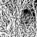 A Bayou Climbing Tree by Gina O'Brien