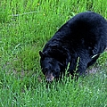 A Bear Over There by Michiale Schneider