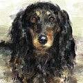 A Beautiful Artistic Painting Of A Dachshund  by Idan Badishi