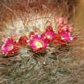 A Beautiful Blur by Linda Sannuti