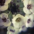A Beautiful Bouquet  by Angela Sherrer