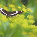 A Beautiful Swallowtail Butterfly On A Yellow Wild Flower by Rusty R Smith