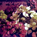 A Bevy Of Hydrangeas  by Jacqueline Manos