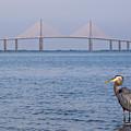 A Bird And A Bridge by Karl Greeson