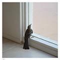 A Bird At A Plate Glass Window by Stan  Magnan