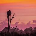 A Birdie Morning by David Johnson