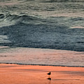 A Bird's Eye View by Karen Wiles