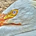 A Bird's Eye View by Michael Garyet