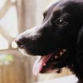 A Black Dog by Silpa Saseendran