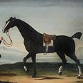 A Black Horse Held By A Groom by MotionAge Designs