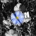 A Blue Flax Special by DeeLon Merritt