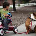 A Boy And His Bulldog by Dan Pearce