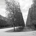 A Break In The Trees by Tom Reynen