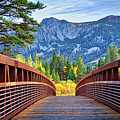 A Bridge To Beauty by Lynn Bauer