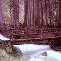 A Bridge To Paradise by Jeff Swan
