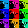 A Bunch Of Bull by Wingsdomain Art and Photography