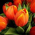 A Bunch Of Tulips by Bonita Brandt