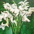 A Bunch Of White Gladioli by Usha Shantharam