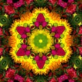 A Burst Of Flowers Kaleidoscope by Pamela Picassito