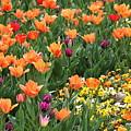 A Burst Of Spring Color by Rosanne Jordan