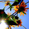 A Burst Of Sunshine by Sherwanda Irvin