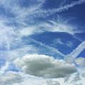 A Busy Sky by Deborah Brodie