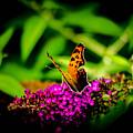 A Butterflies World  by Bruce Pritchett