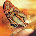 A Butterfly On A Leaf  by Maria Angelica Maira