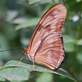 A Butterfly With Closed Wings by Susan Heller