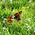 A Calf's Perfect Haven  by Cathy Beharriell