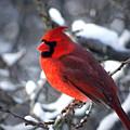 A Cardinal Day... by Arthur Miller