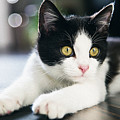A Cat With Black And White Fur by Queso Espinosa