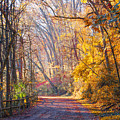 A Change Of Seasons On Forbidden Drive by Bill Cannon