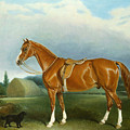 A Chestnut Hunter And A Spaniel By Farm Buildings  by John E Ferneley