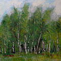 A Cluster Of Birch by David Patterson