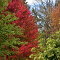 A Collection Of Fall Colours by Maria Keady