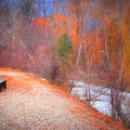 A Colourful Winter by Tara Turner