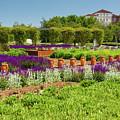 A Corridor Of Purple Sage Flowers And Stachys Lanata Sunlit by Daniele Mattioda