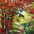 A Country Path In Autumn by Autumn Scenes