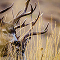A Couple Of Bucks by Albert Seger