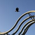 A Crow In Flight, Arhus, Denmark by Keenpress