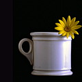 A Cup Of Flower by Wallace Rollins