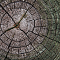 A Cut Above - Patterns Of A Tree Trunk Sliced Across by Mitch Spence