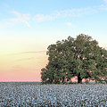 A Deeply Southern Sunrise by JC Findley