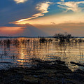A Different Shoreline by Carolyn Fletcher